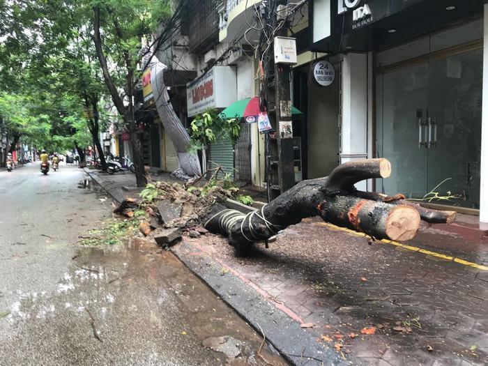 Mưa gió lớn sau bão số 3, nhiều cây xanh ở Hải Phòng bị quật đổ, đường ngập sâu ảnh 7