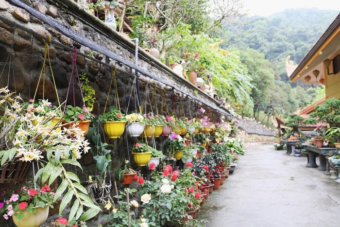 Thiền viện có nhiều loài hoa quý được du khách yêu thích. (Ảnh: IG/ngaabe)