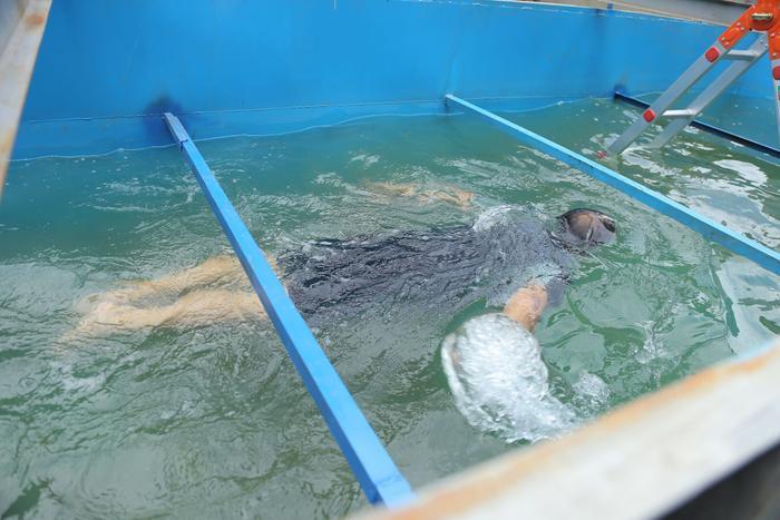 Chuyên gia Nhật Bản bơi tung tăng trong bể nước dưới sông Tô Lịch.