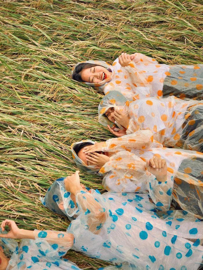 Những cánh đồng lúa chín chính là bối cảnh chính của các cô cậu học sinh.