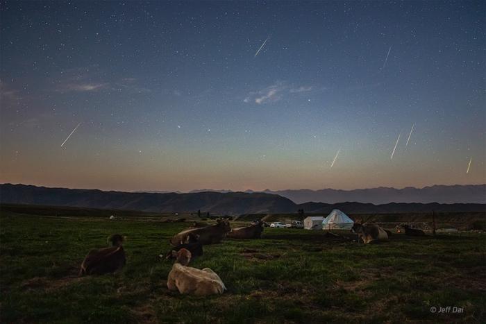 Những chú bò ngắm mưa sao băng tại thảo nguyên Nalati, Tân Cương, Trung Quốc. Ảnh: Dai Jianfeng