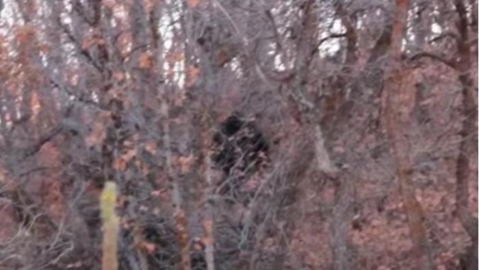 Đoạn phim Bigfoot ghi lại vào tháng 10 năm 2012 tại Provo Canyon./