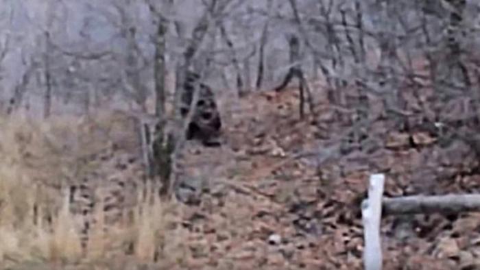 Một đoạn phim ghi lại cảnh một con Bigfoot tấn công người tại Provo Canyon vào năm 2012.