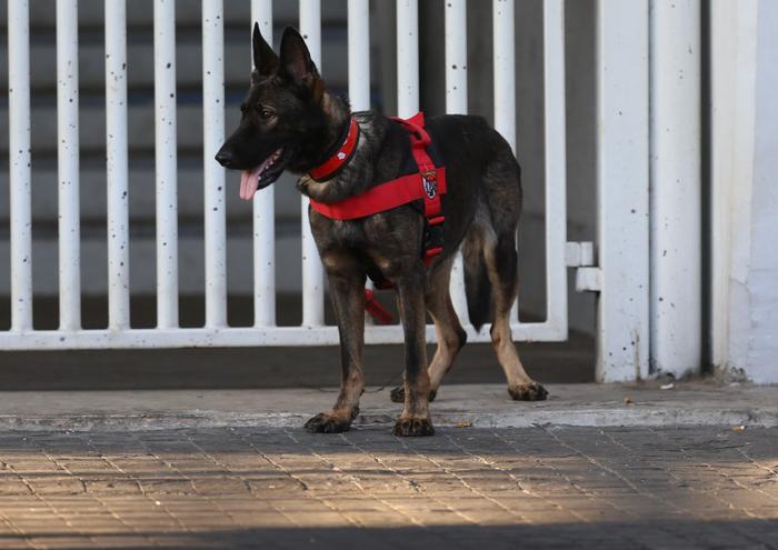 Chó nghiệp vụ cũng được Indonesia sử dụng để đảm bảo an ninh.