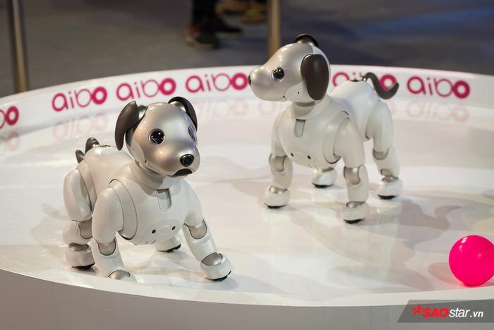 Chú chó Aibo xuất hiện tại Sony Show 2019 này được lập trình các biểu hiện cảm xúc riêng biệt để phù hợp chơi đùa với cả 2 đối tượng gia đình và giới trẻ, đây là một tiết mục được xem là đáng trông chờ nhất hiện nay.