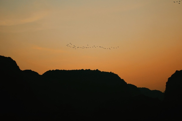 Một đàn chim bay qua hoàng hôn Tam Cốc.