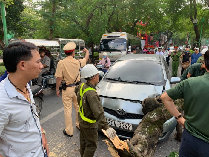 CSGT điều khiển giao thông tránh ùn tắc khu vực cây đổ