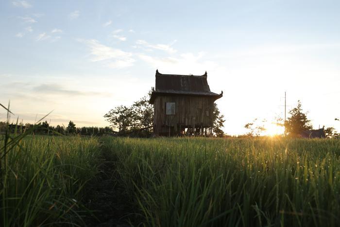 Căn nhà nằm lọt thỏm giữa cánh đồng lúa
