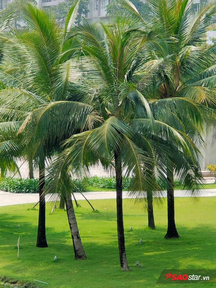 Dùng tiếp chế độ zoom lai 5X, bạn có hẳn bức ảnh chụp cận mấy cây dừa xanh trông tươi mát thế này