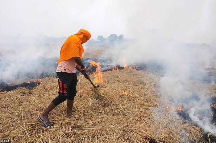 Việc người dân đốt rơm rạ góp 44% vào tình trạng ô nhiễm ở Delhi.