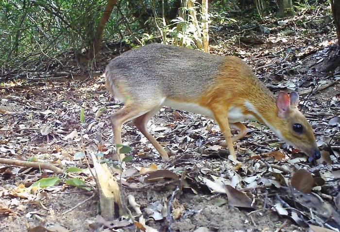 Đây là loài động vật đặc thù, chỉ riêng Việt Nam mới có.