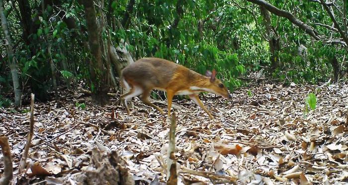 Các nhà khoa học đang kêu gọi cộng đồng bảo tồn loài vật này.