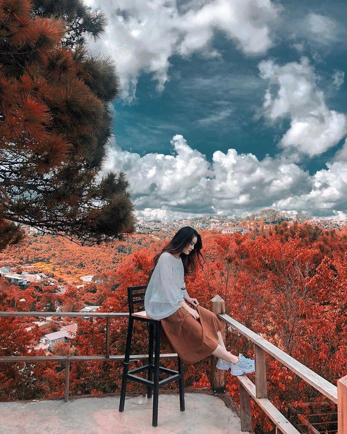 Không cần phải sang tận các nước châu Âu hay Bắc Mỹ, chỉ cần đến Đà Lạt mùa này, du khách sẽ được ngắm những quần thể phong lá đỏ thơ mộng. Nhữngchiếc lá phongdần đổi màu, màu lá xanh bắt đầu chuyển sang vàng úa hoặcmàu đỏ ối cả một góc trời,nổi bật giữa cánh rừng láxanh.