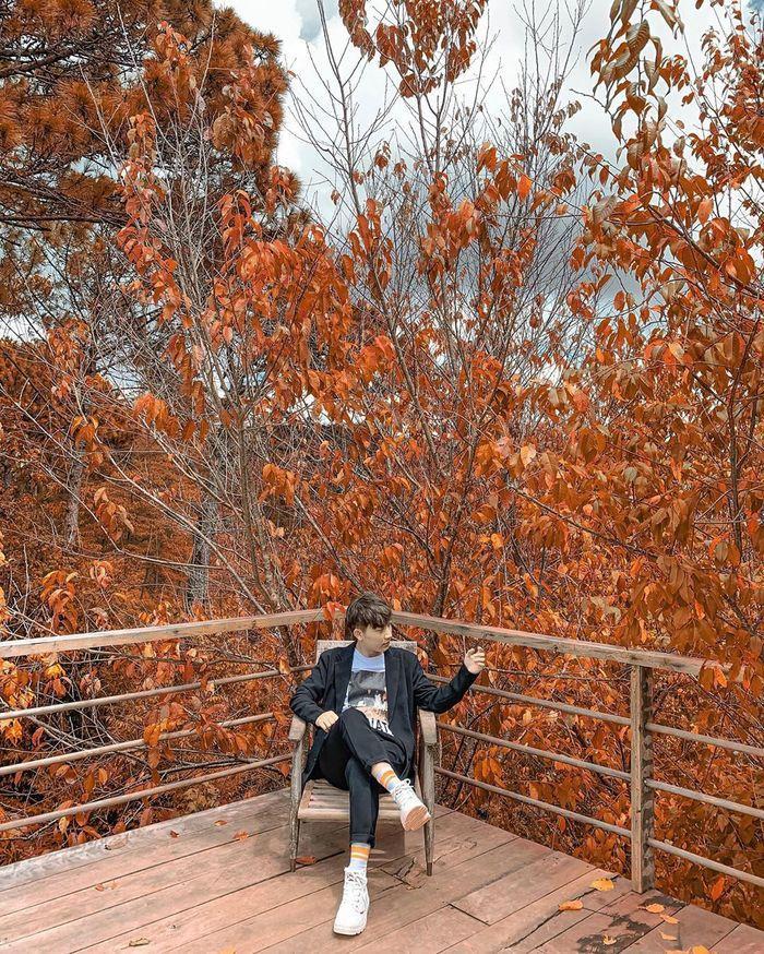 Rừng lá phongtuyệt đẹp cách trung tâm thành phố Đà Lạt hơn 20km, nằm ẩn sâu trong hồ Tuyền Lâm. Để đến được đây thìcách duy nhất là đi thuyền hoặc ca nô khoảng 6kmtrên mặt nước,tiếp đó là 15 phút đi bộđể tiến sâu vào khung trời phủ đỏ bởi những cành lá phong.