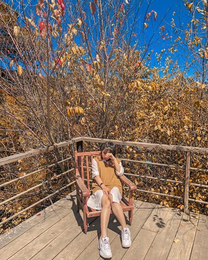 Khi thời tiết chuyển sang cuối thu đầu đông, những tán lá phong trong khu rừng chuyển dần sang vàng rồi đến đỏ rực rỡ tạo nên 1 khung cảnh như đang trời Âu.