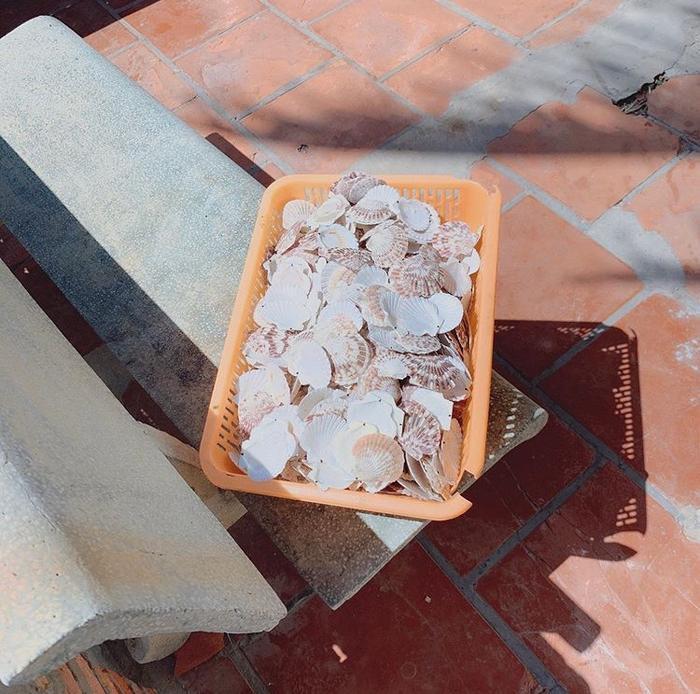 Những chiếc vỏ sò xinh xắn dưới ánh nắng.
