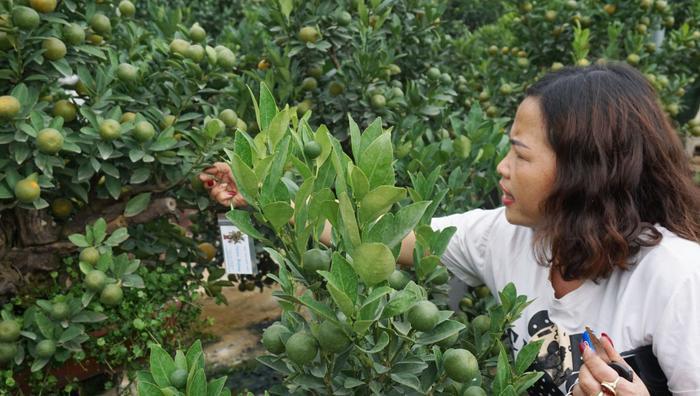 Để không bị nhầm lẫn chị Hương cẩn thận ghi tên từng vị khách vào tờ giấy treo trên cây quất đã đặt.