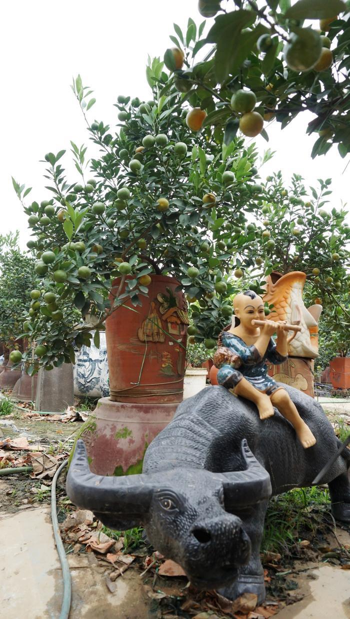 Ngày Tết việc trưng bày một cây quất như thế này sẽ tạo nên không khí ấm cúng, một năm mới nhiều tài lộc, may mắn…