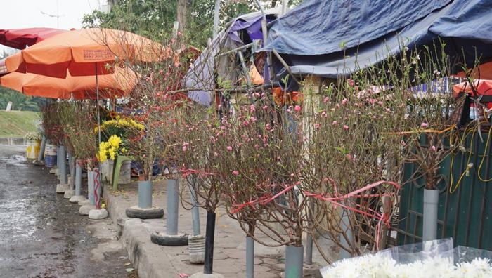 Tại chợ hoa Quảng An, những cành đào nở hoa đỏ rực đã được người trồng hoa Nhật Tân bày bán.