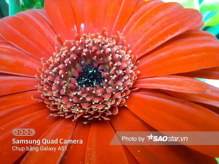 Bạn có thể thấy dù dí rất sát nhưng chi tiết cánh hoa, nhụy hoa được camera macro trên Galaxy A51 thể hiện tách bạch