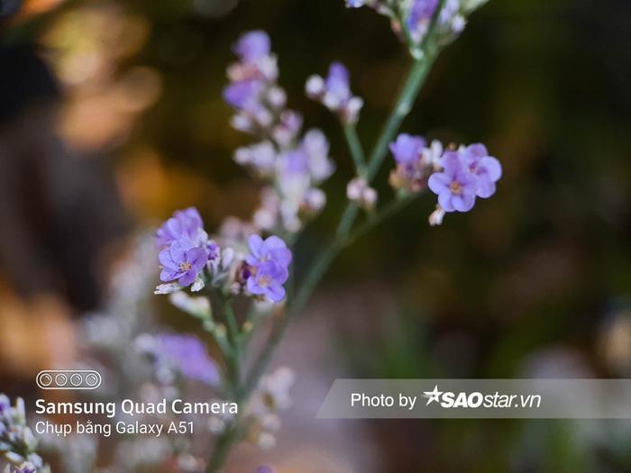 Còn camera macro trên Galaxy A51 chụp thấy rõ từng bông hoa thế này cơ