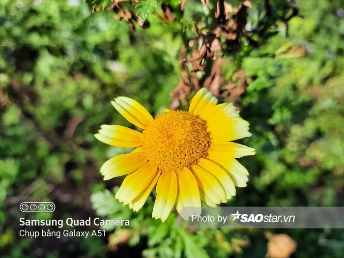 Đánh giá khả năng chụp cận cảnh trên Galaxy A51: Thêm camera macro có gì hay? ảnh 15