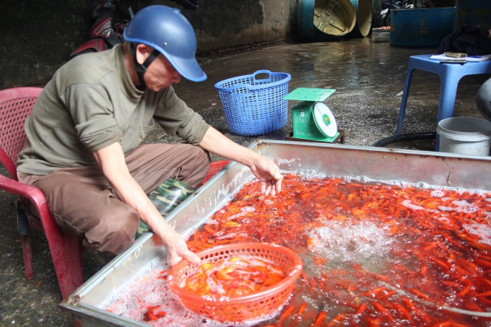 Chợ cá lớn nhất thủ đô đỏ rực trước ngày lễ ông Công ông Táo ảnh 9