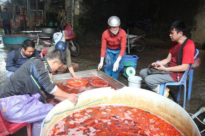Chợ Yên Sở vốn vẫn được mệnh danh là chợ cá lớn nhất thủ đô Hà Nội. Cảnh người mua bán diễn ra tấp nập.