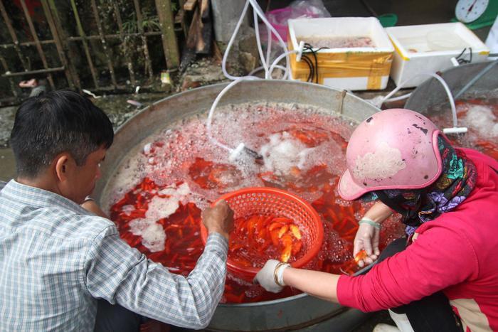 Chợ cá lớn nhất thủ đô đỏ rực trước ngày lễ ông Công ông Táo ảnh 2