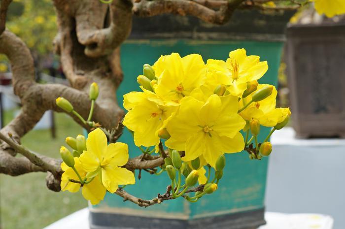 Mọi người luôn kỳ vọng, gửi gắm những hy vọng những tốt đẹp nhất về một tương lai may mắn trong dịp Tết đến Xuân về. (Ảnh:Prenn / Wikipedia)