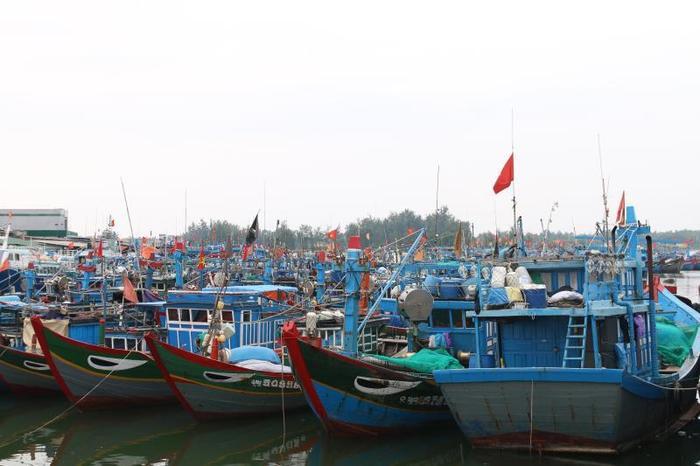 Trong số hàng trăm tàu thuyền neo đậu ở cảng Tịnh Hòa, tàu của ngư dân Gành Cả chiếm số lượng lớn.