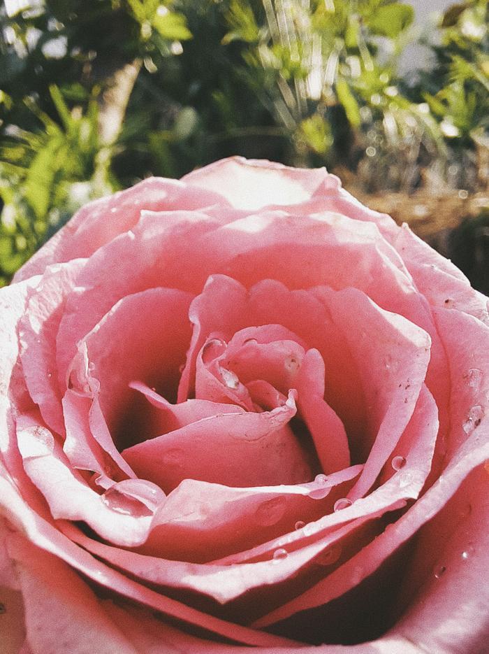 Có một Valentine đẹp chưa từng qua ống kính macro chụp cận cảnh ảnh 0