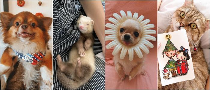 Tím và Thi hiện có nuôi 2 chú mèo Anh, 2 chú cún Chihuahua lông dài và 1 chú chồn Ferret tại ngôi nhà chung của 2 người.