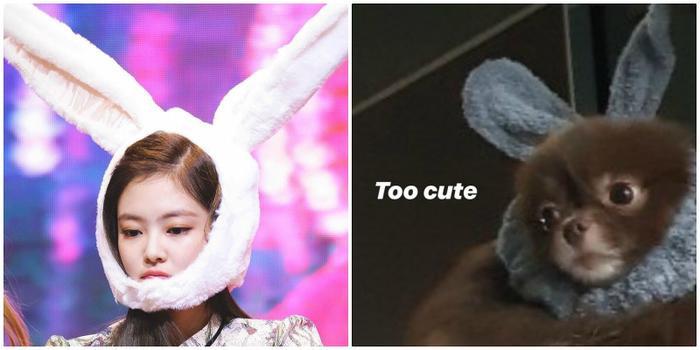 Còn đây là mũ tai thỏ.