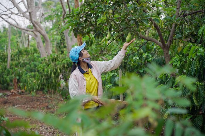 Về quê làm vườn, HHen Niê duyên dáng thừa nhận: Hen điên quá nên ế, làm hoa hậu mới có người vớt ảnh 1