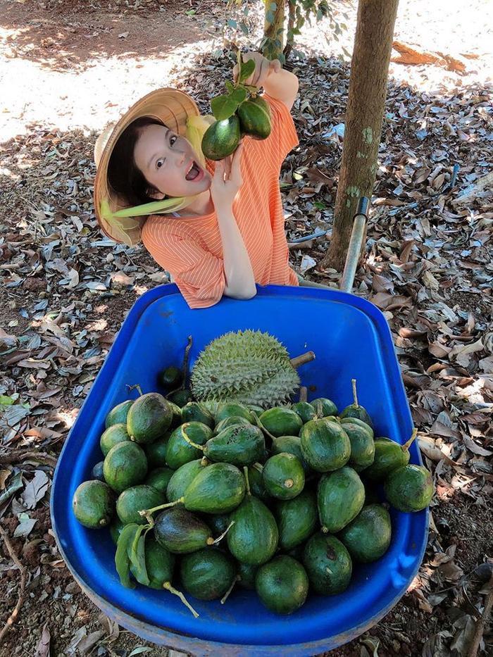 Lý Nhã Kỳ không chỉ sở hữu trang trại trồng rau sạch ở Đà Lạt mà cô còn có cơ ngơi trồng cây ăn quả rất hoành tráng ở Bà Rịa Vũng Tàu