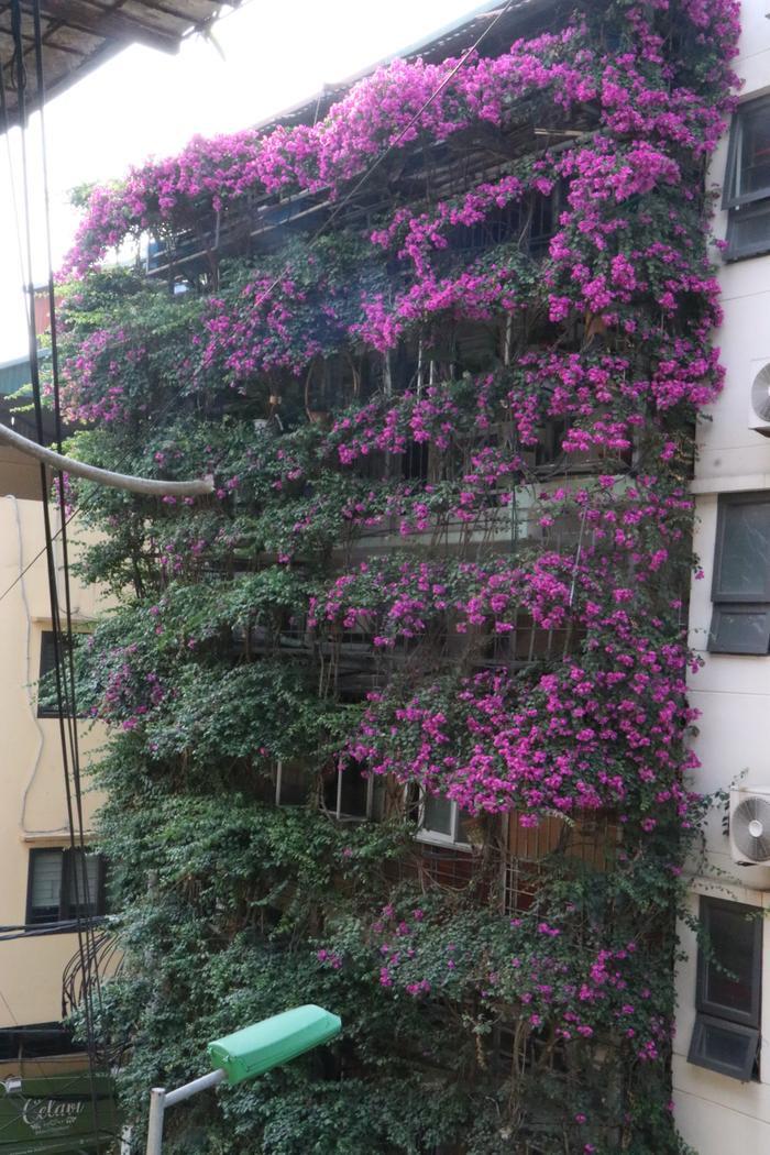 Các giàn hoa giấy được ghép xếp thành từng tầng.