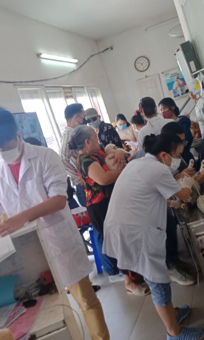 Do nắng nóng nhiều thú cưng được đưa đến bệnh viện.