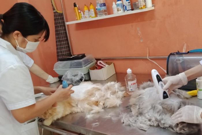 Nắng nóng hơn 40 độ, nhiều chó mèo Tây phải nhập viện cấp cứu vì bị sốc nhiệt ảnh 9