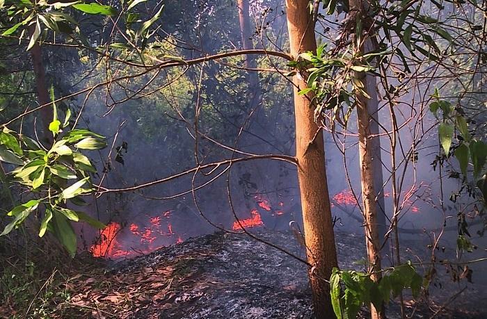 Cánh rừng tràm nằm sát sân bay quốc tế Đà Nẵng bùng cháy dữ dội. Ảnh: VietNamNet