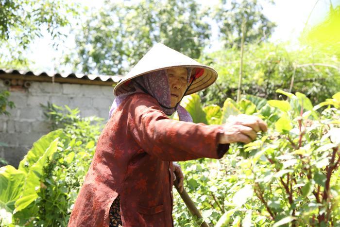 Cụ bà gần 90 tuổi vẫn phăng phăng đi cấy, trồng rau khiến giới trẻ xách dép' đuổi theo: 'Các cháu chưa chắc đã bằng tôi, còn khoẻ tôi còn làm' Ảnh 6