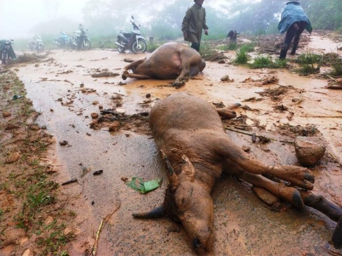 Sạt lở đất sau bão số 5 vùi lấp đàn trâu 8 con ở Nghệ An Ảnh 2