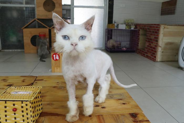 Chàng trai 24 tuổi bỏ công việc thu nhập ổn định cứu những chú mèo bất hạnh, xuất hiện trên hãng thông tấn AFP Ảnh 9