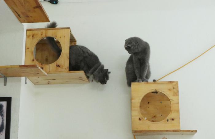 Chàng trai 24 tuổi bỏ công việc thu nhập ổn định cứu những chú mèo bất hạnh, xuất hiện trên hãng thông tấn AFP Ảnh 6