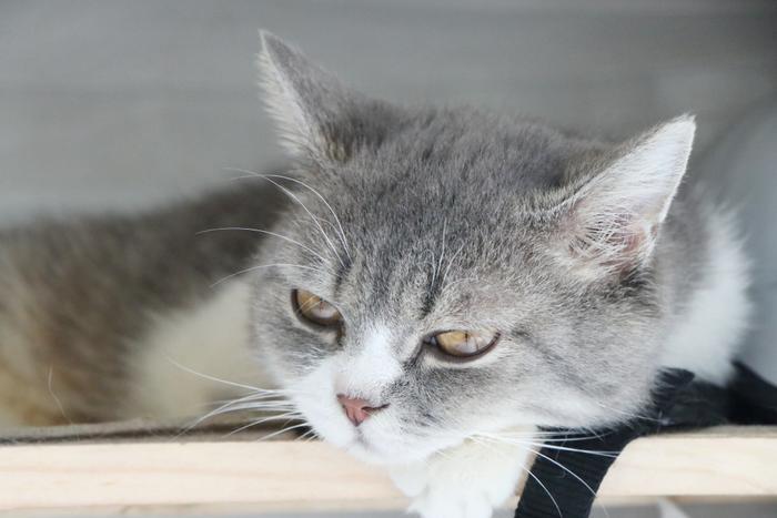 Chàng trai 24 tuổi bỏ công việc thu nhập ổn định cứu những chú mèo bất hạnh, xuất hiện trên hãng thông tấn AFP Ảnh 17
