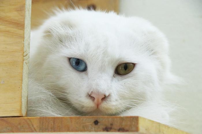 Chàng trai 24 tuổi bỏ công việc thu nhập ổn định cứu những chú mèo bất hạnh, xuất hiện trên hãng thông tấn AFP Ảnh 8