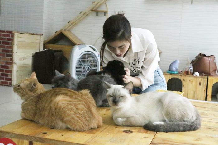 Chàng trai 24 tuổi bỏ công việc thu nhập ổn định cứu những chú mèo bất hạnh, xuất hiện trên hãng thông tấn AFP Ảnh 21