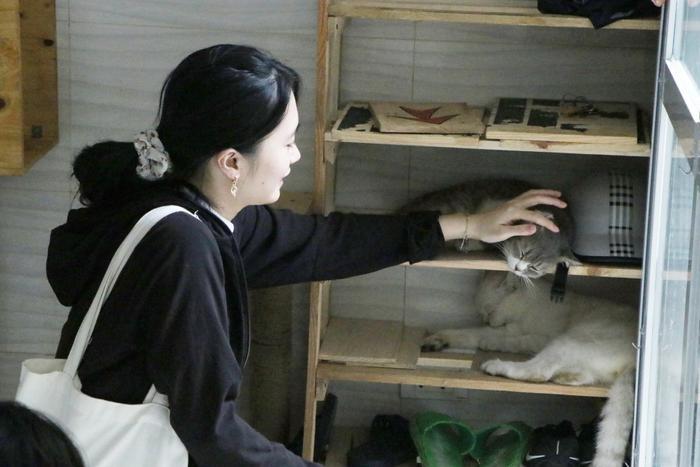 Chàng trai 24 tuổi bỏ công việc thu nhập ổn định cứu những chú mèo bất hạnh, xuất hiện trên hãng thông tấn AFP Ảnh 20