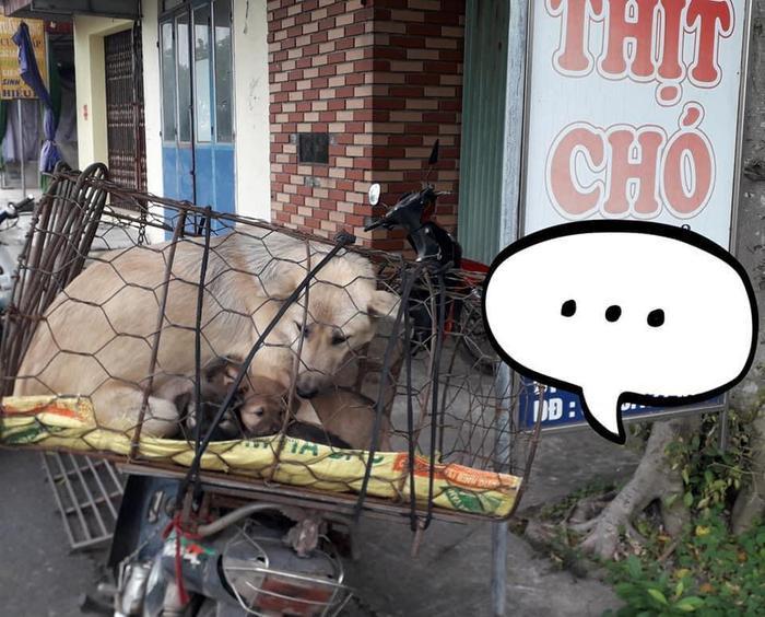 Xót xa hình ảnh chó mẹ cho đàn con bú trước khi bị đưa vào lò mổ Ảnh 1
