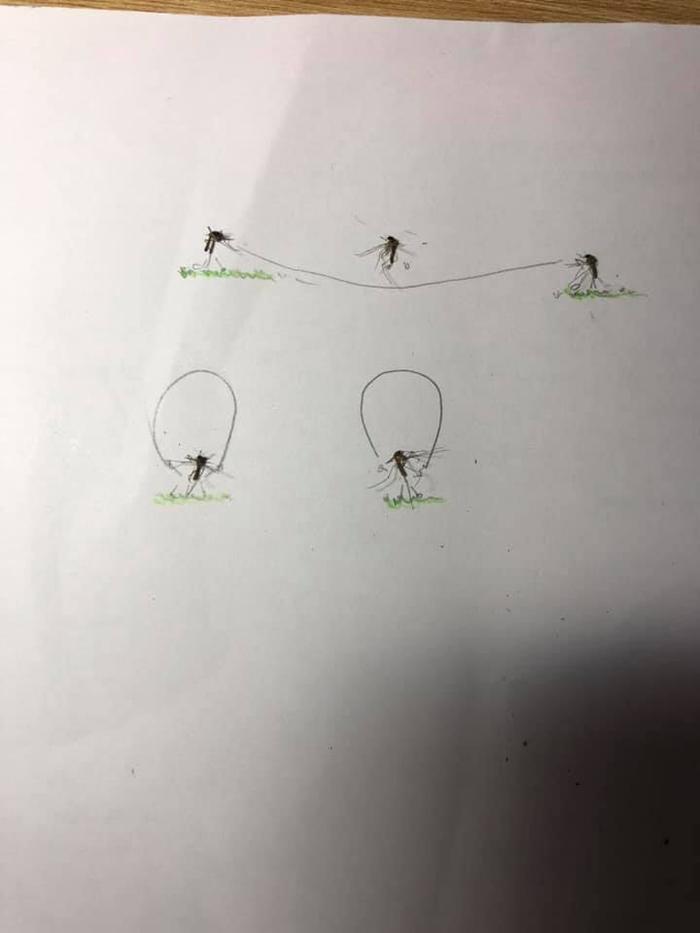 Qua cái nhìn của giới học trò, loài muỗi vốn đáng ghét nay lại trở nên sinh động thế này đây! Ảnh 5
